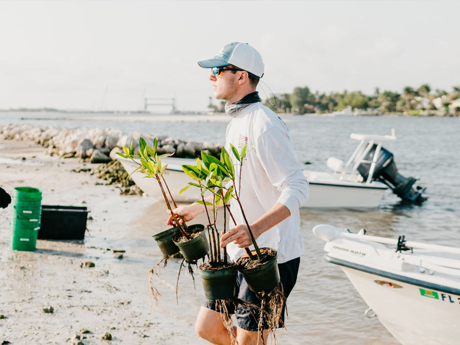 wpbfc member transporting mangroves