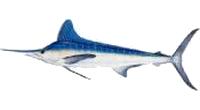Marlin, White
