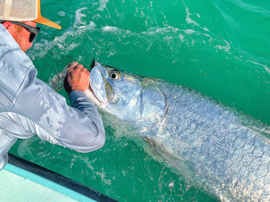tarpon released boat-side